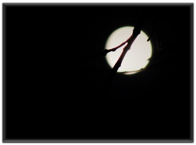 六月荷花摄影诗歌《十五的月亮》(39) - 六月荷花 -  六 月 荷 塘