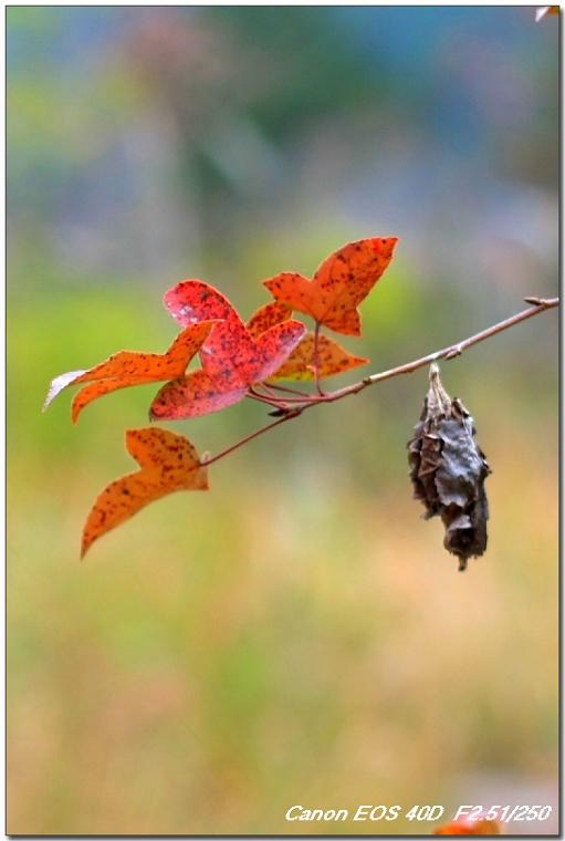 【原创摄影】秋天符号 - 王工 - 王工的摄影博客