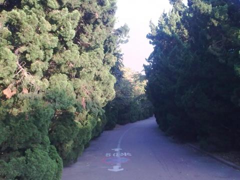 秋日八大关 - 海港的街道 - 海港的街道