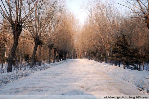 雪还在飘着…… - 北大荒之树 - 北大荒人