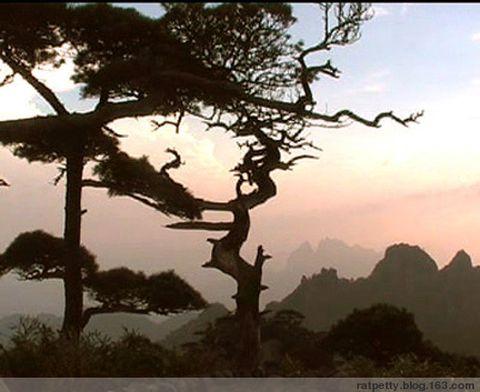 武夷山、三清山、婺源、黄山、扬州、太姥山、巽寮湾等 - 老鼠皇帝+首席村妇 - 心底有路,大爱无疆