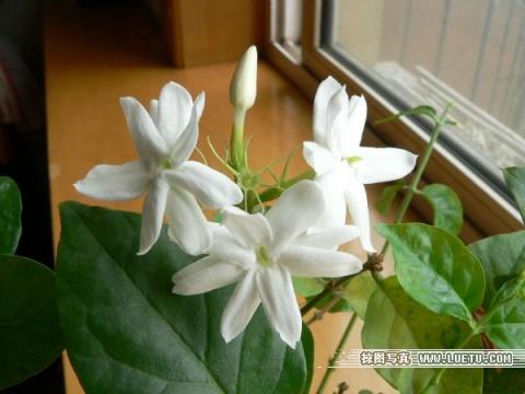 记忆转载(2007.06) - 朵儿 - 朵儿