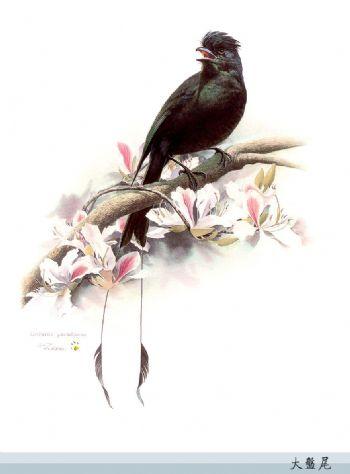 百鸟图 - xiaoxiao.xiaohua - xiaoxiao的博客