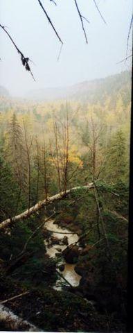 长白山~~地下森林(2) - 六月荷花 -  六 月 荷 塘