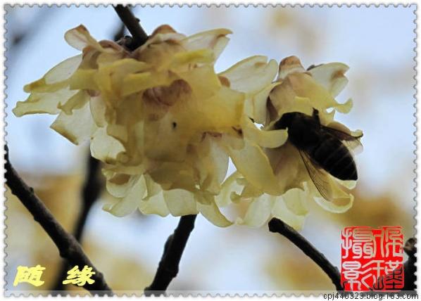 勤劳的蜜蜂 - 随缘 - 相逢是缘,欢迎光临陋室,愿大家万事如意!