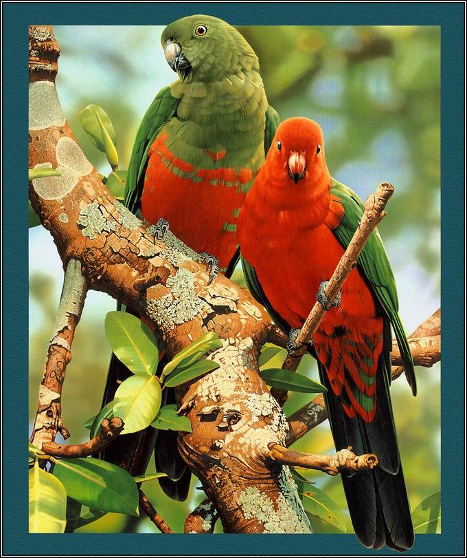 (文:原,图:转)鸟类的宣言----写给爱鸟周 - 桃源居士 - 桃源居