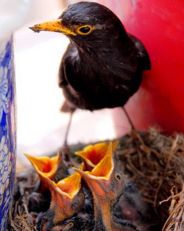实拍小鸟成长全过 - fyc1123 - 南关小巷