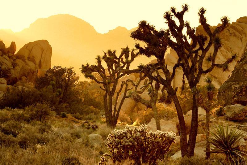 沙漠花娘【景物素材图片】 - 寒烟的博客 -