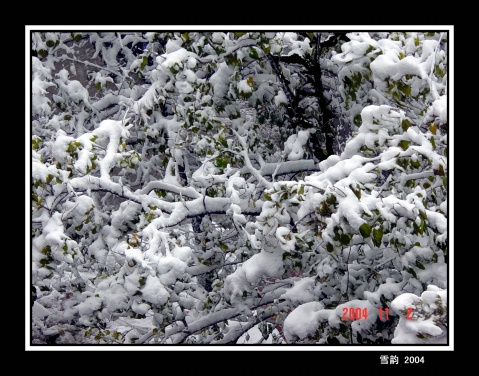 2004年的第一场雪 - 心中驿站 - 心中驿站