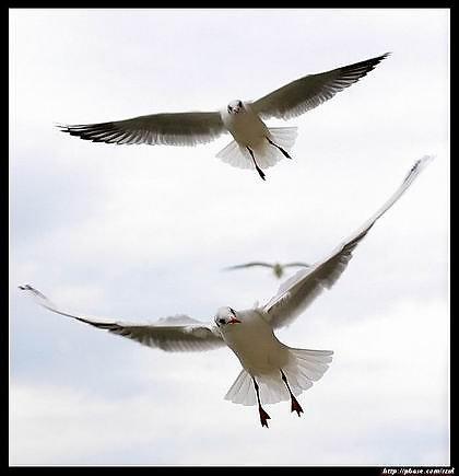 执子之手,与子偕老 - 我心飞翔 - 我心飞翔