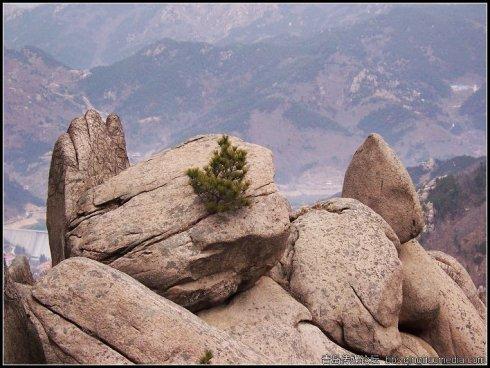谁欺负了崂山的石头(四) - qdgcq - 青岛从容