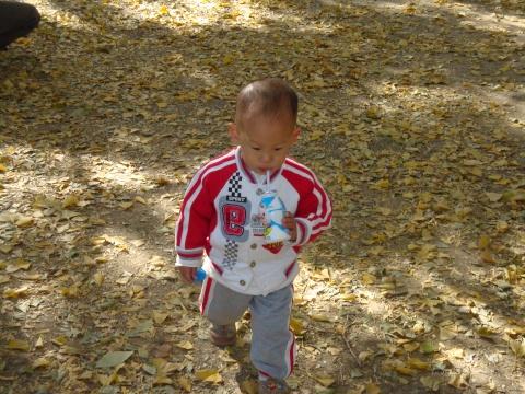 小孙子在秋日的落叶中 - 好梦成真 - 我的博客