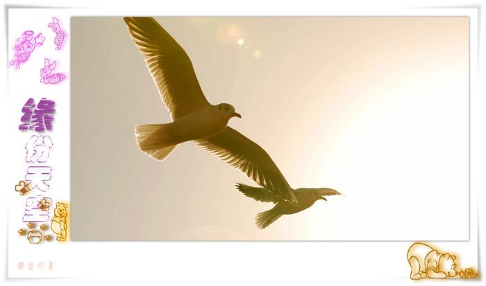[原创]鸟影09海鸥——缘份天空 - 迁徙的鸟 - 迁徙鸟儿的湿地