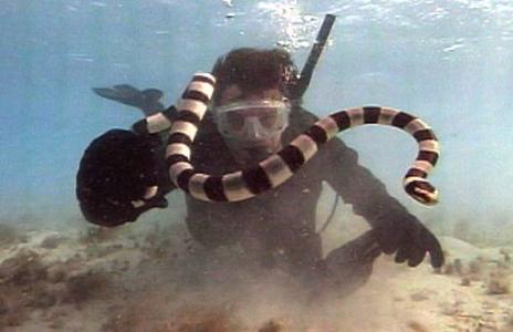 海陆空三种最致命的毒蛇:树蛇能空中滑行近百米(多图) - zhiai113 - 看天下