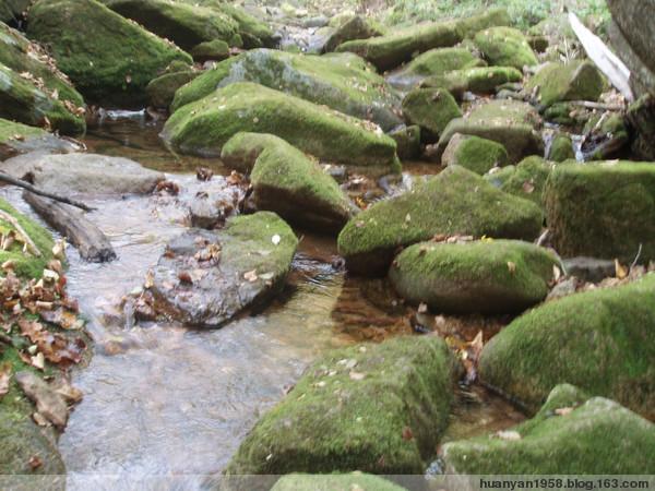 绿石谷 - 欢颜 - 欢颜的博客