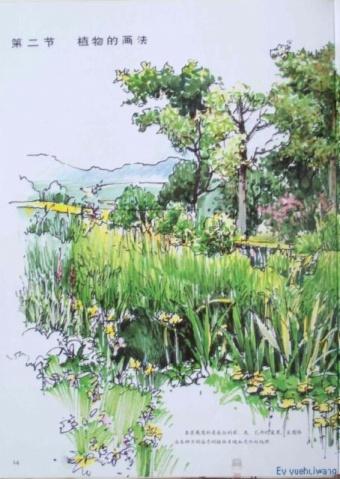 景观园林; 景观设计手绘效果图技法(组图); 室外手绘,钢笔速写(植物