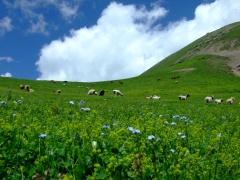 梦中草原—萨尔巴斯套 - 孤独的树 - 木木