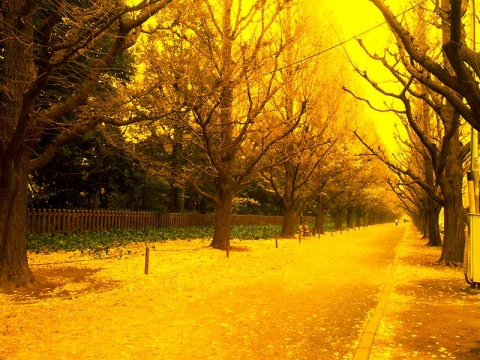引用 美景尽收 - 金秋十月 - 我的博客----怡心小居