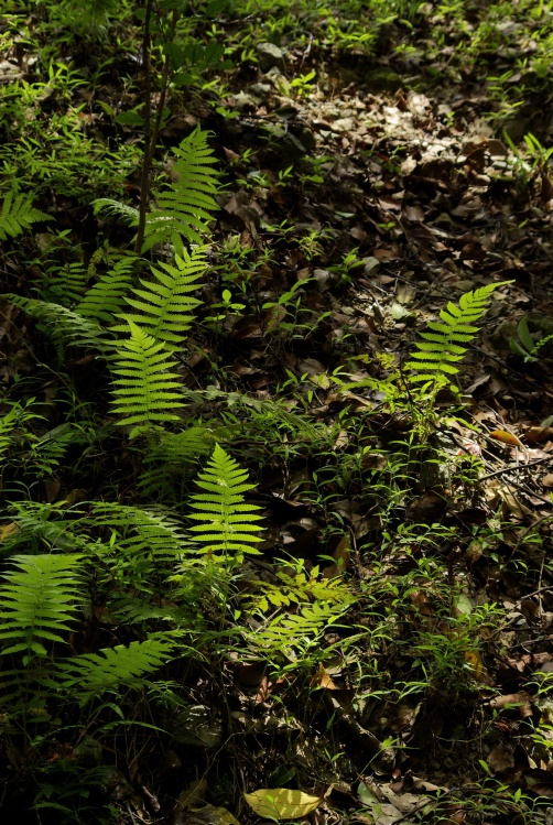 【原創】聽見森林在呼喚[上篇]香港西貢-黃毛應至水浪窩 - B 哥 - B 哥的博客