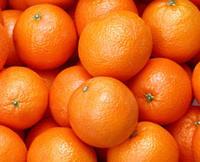 131。吃橙子 - 娟子 - 蒲公英