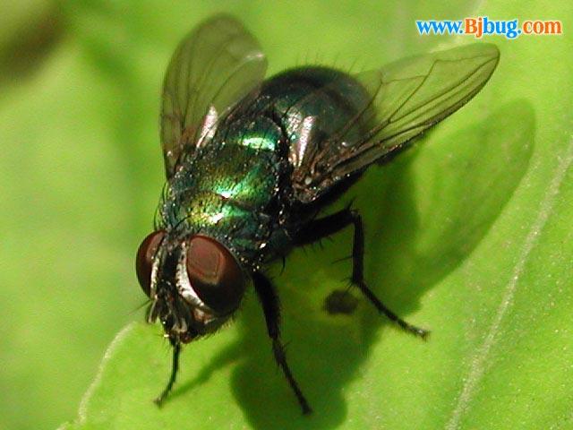 苍蝇的见闻 - haishi0901 - 海市