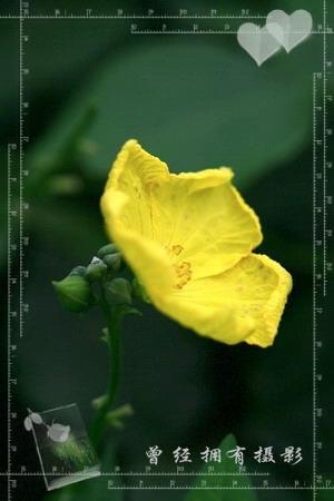 2008年10月27日 - 曾经拥有 - 我的摄影花园