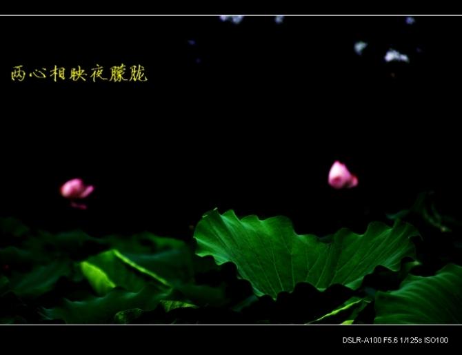 花草无意人有情 - 刚峰先生 - 天涯横呤