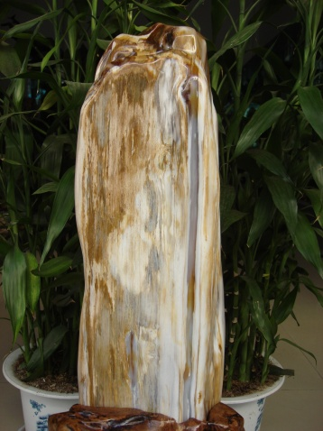 荣辱与共 - 缅甸树化王-山喜 - 缅甸树化王的博客