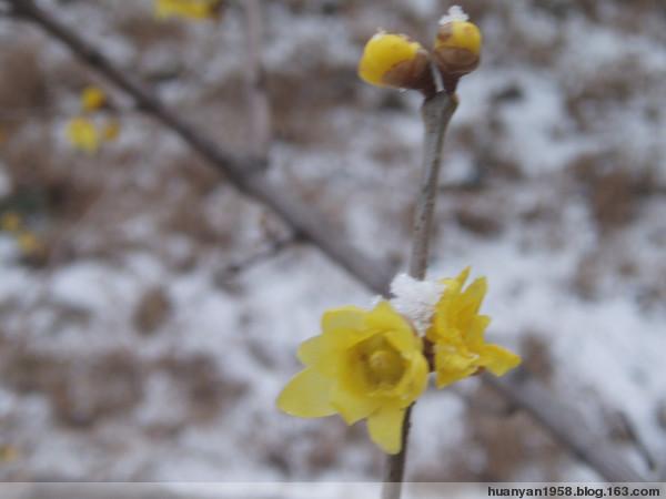 踏雪寻梅 - 欢颜 - 春天在向我们走来