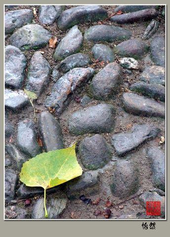 2008年12月12日 - 怡然 - 怡然小居