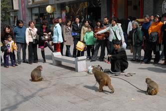 猴也见钱眼开   08.03.04