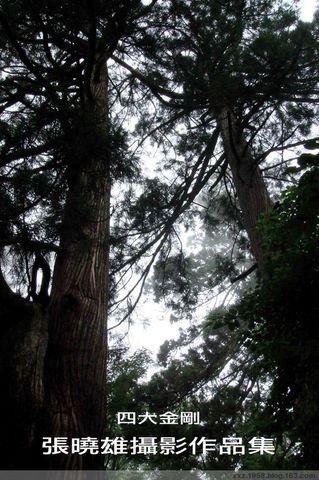 天目山遊記 - 野熊 - 野熊荒地