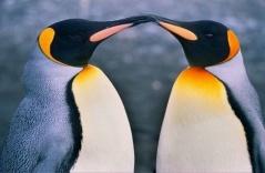 可爱的企鹅宝宝们【组图】 - 蝴蝶 - 一日一生