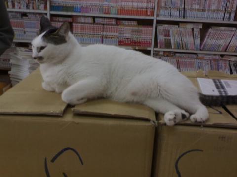 某書店的兩隻貓 - 鏡夜狐狸男 - 腐女的天堂后花園
