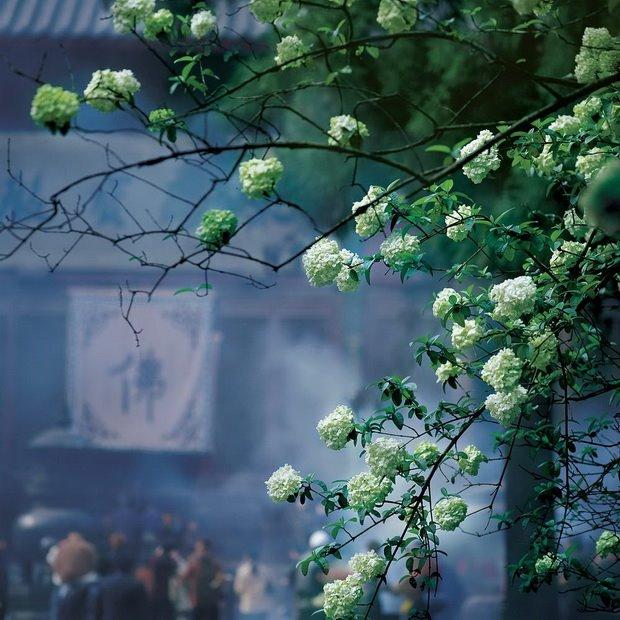【图文】心灵深处的菩提树 - 姜炎烛火 - 姜炎烛火