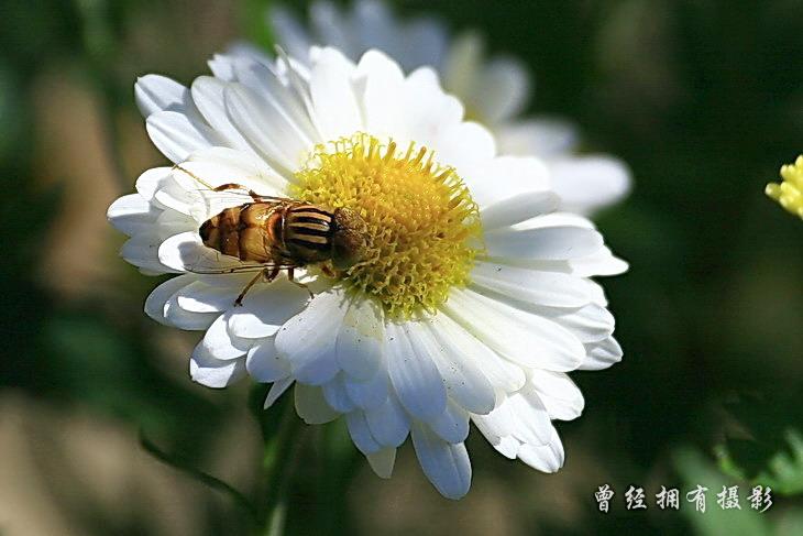 (原创摄影)原来是斑眼食芽蝇 - 曾经拥有 - 我的摄影花园