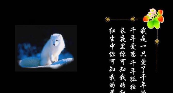 月色白狐 - 蝴蝶 - 蝴蝶