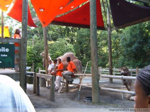 我的赴美日记[31]纽约动物园之旅 - 叶红 - 给自己一个理由,让自己活得更精彩