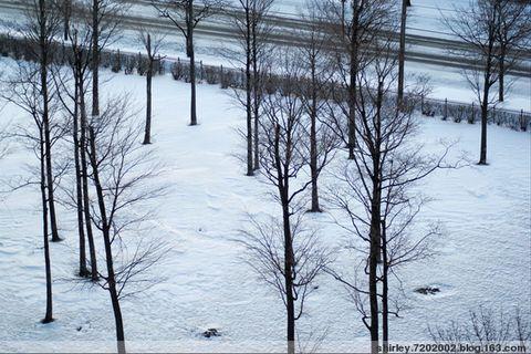 昨天的那场暴风雪 - shirley.7202002 - shirley.7202002的博客
