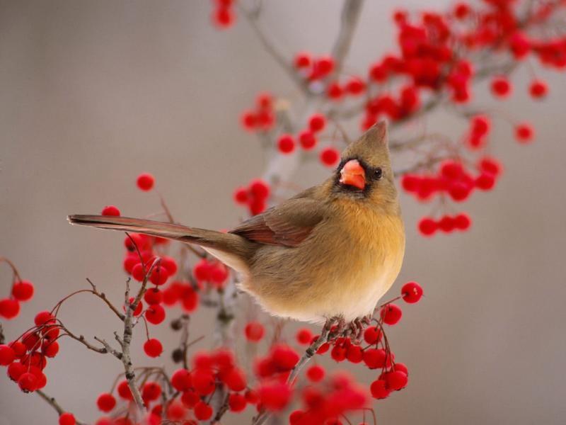 引用 绝美视听之小鸟 - 踏纱行步 - 临江仙阁  ----踏纱行步的书画艺术