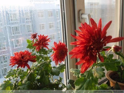 花开了,给我唱首歌吧 - 红色毛芨芨 - xjwuxiaofei的博客