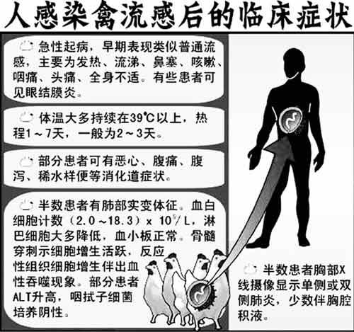 人感染禽流感后的临床症状 - 一叶小舟 - tstzr1949的博客