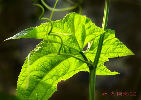 (原创)农家菜园 之二 - 高山长风 - 亚夫旅游摄影博客