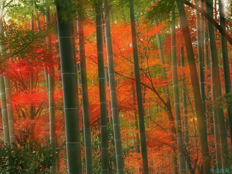 地球上最美丽的风景!【极品美图】 - 無為居士 - 無為齋