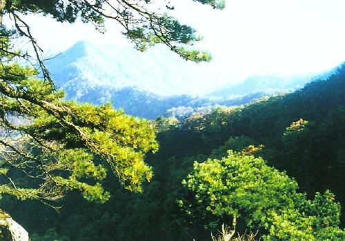 秀美的南阳我的家之南召篇(照片) - 踏雪寻梅 - 李新月3186的博客