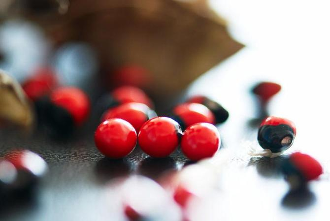 红豆 - 为谁向天乞怜哀 - 一梦千寻 的博客