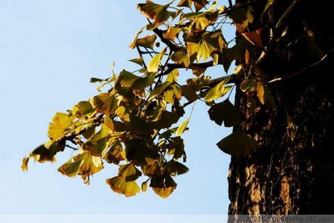 《广东南雄行》   - RZJ摄影屋 - RZJ摄影屋的博客