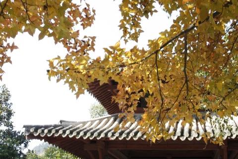 大佛寺的秋叶 - 汪洋 - 汪洋的博客