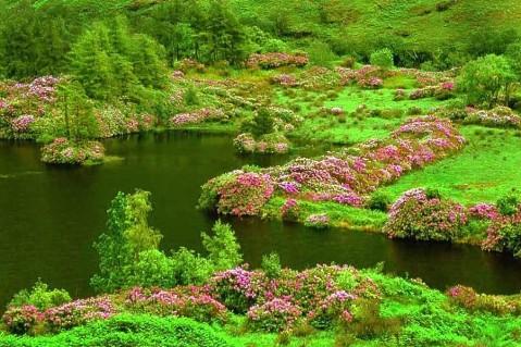 (原创)春天在哪里 - 真水无香  - 香格里拉 花开的地方