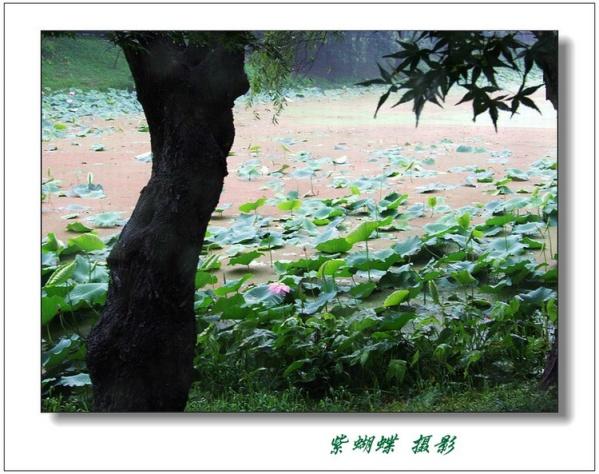 雨中的故事 - 紫蝴蝶 - 紫蝴蝶的视觉世界